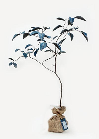 幹は本物の木、葉はデニム!? たくさんのWow! を生む「木」のオブジェ
