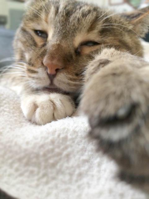 2月22日は「猫の日」。(=^・^=)