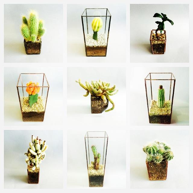 伝えたいのは植物の造形美。廃材リユースプロジェクト「ハコミドリ」