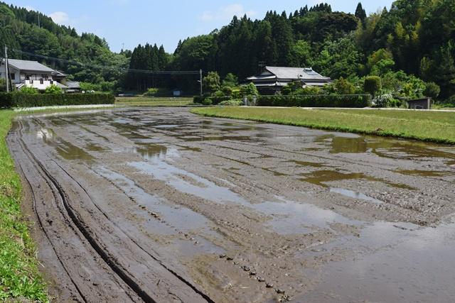 竹田の里山で育まれる土壌