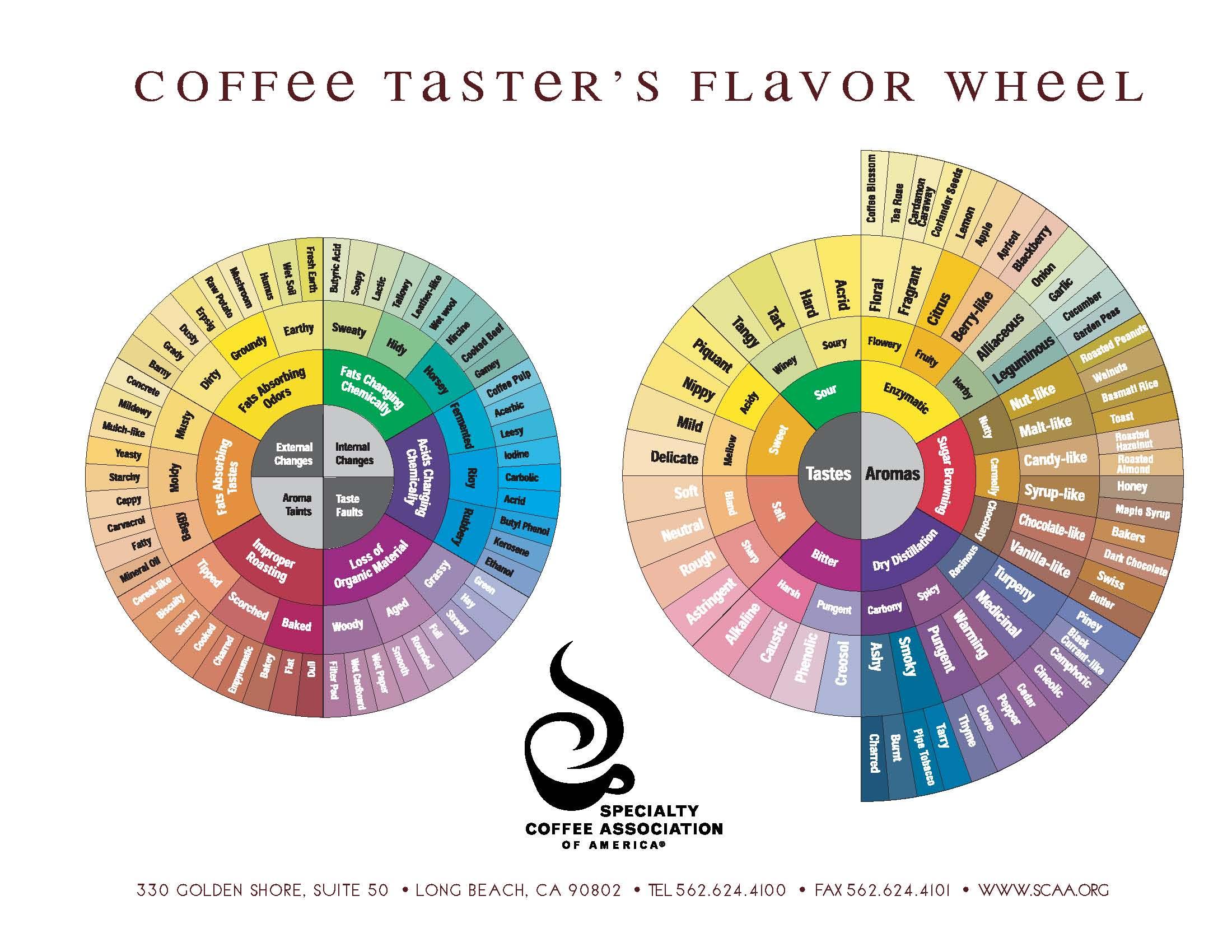 コーヒー初心者が覚えておくべき5つの味基準