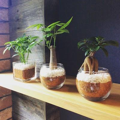 「植物をもっと身近に感じたい」誰でも簡単にはじめられる、グリーンライフのご提案【セール実施中】