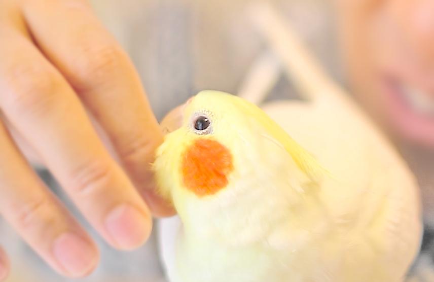 傷ついた小鳥を救うお手伝いができればと考えています。