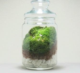 都会の暮らしにも植物を!
