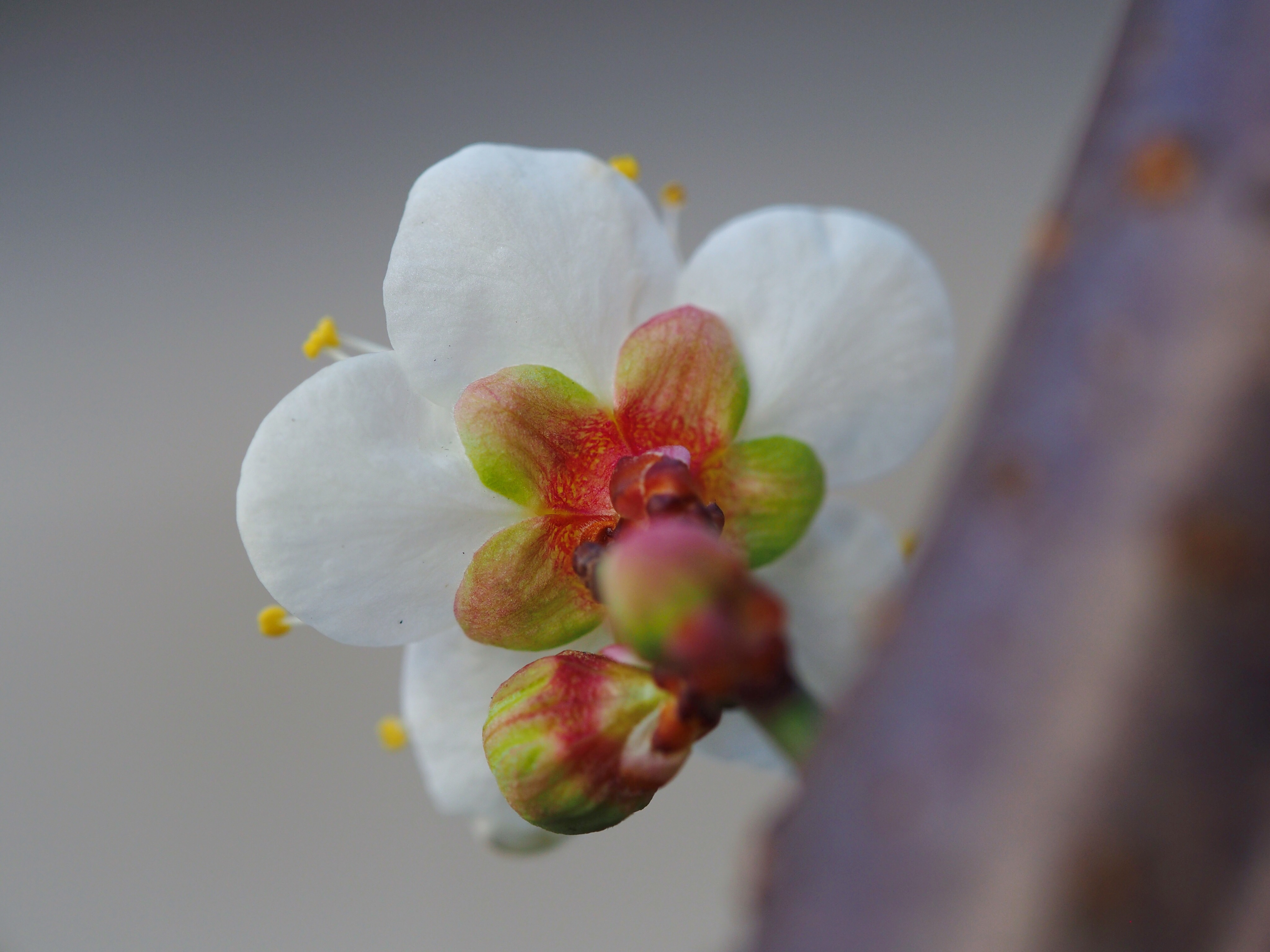 ー 梅の花  ー
