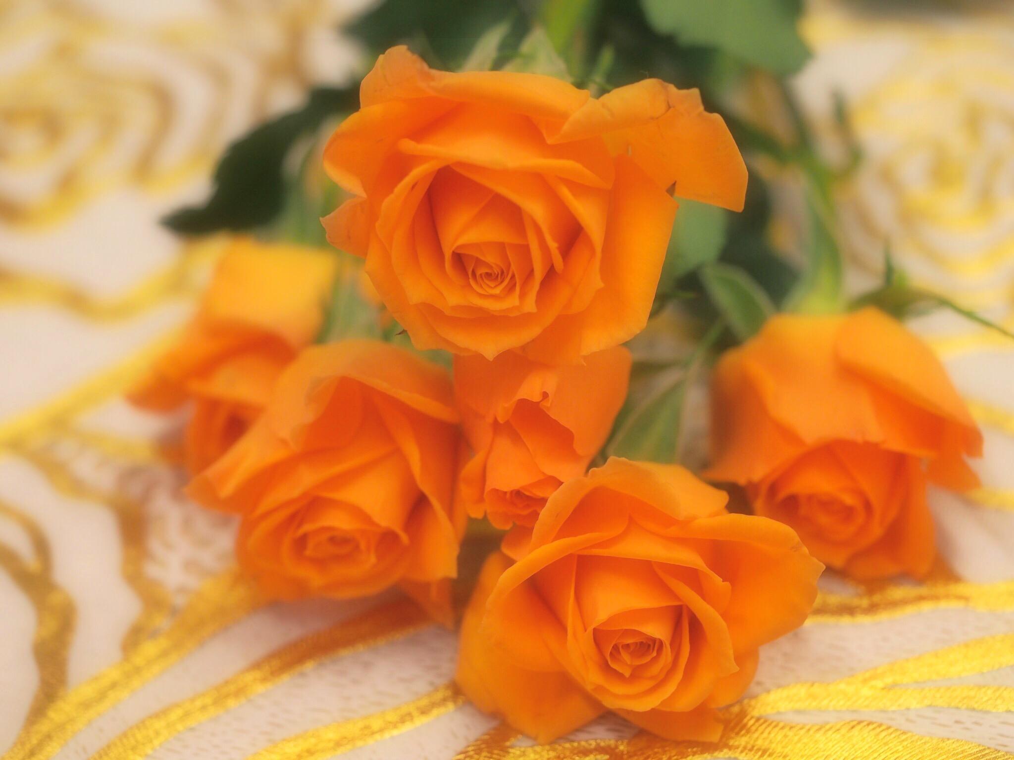 オレンジの可愛いスプレーバラ