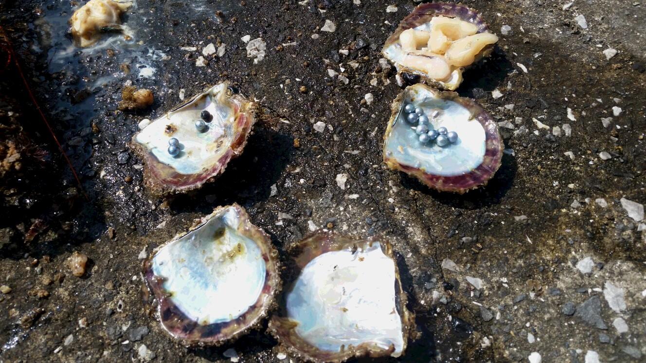 入手困難!激レア SILENT BLUE (サイレントブルー)2015 生命の水の真珠
