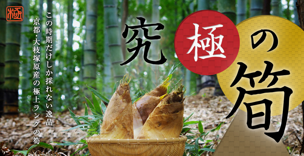 極上の旬の味覚、究極の筍 (京都・大枝塚原産「白子筍」)販売中!