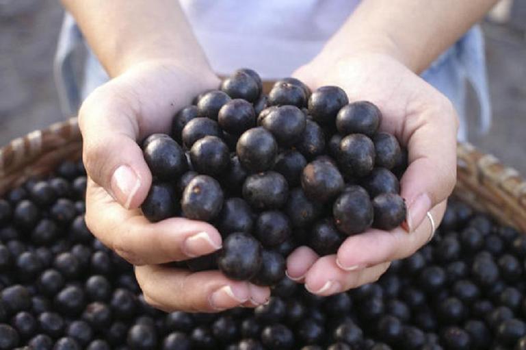 旅する果物。ブラジルの奇跡アサイーが、故郷から、日本のわたしたちの手元に届くまで。