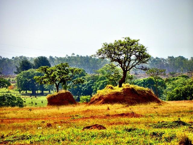 美味しく森を再生する。環境型農法「アグロフォレストリー」のこと