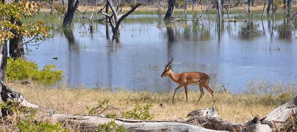 自信や強さを引き出してくれる、鹿の角モチーフのアクセサリーたち。