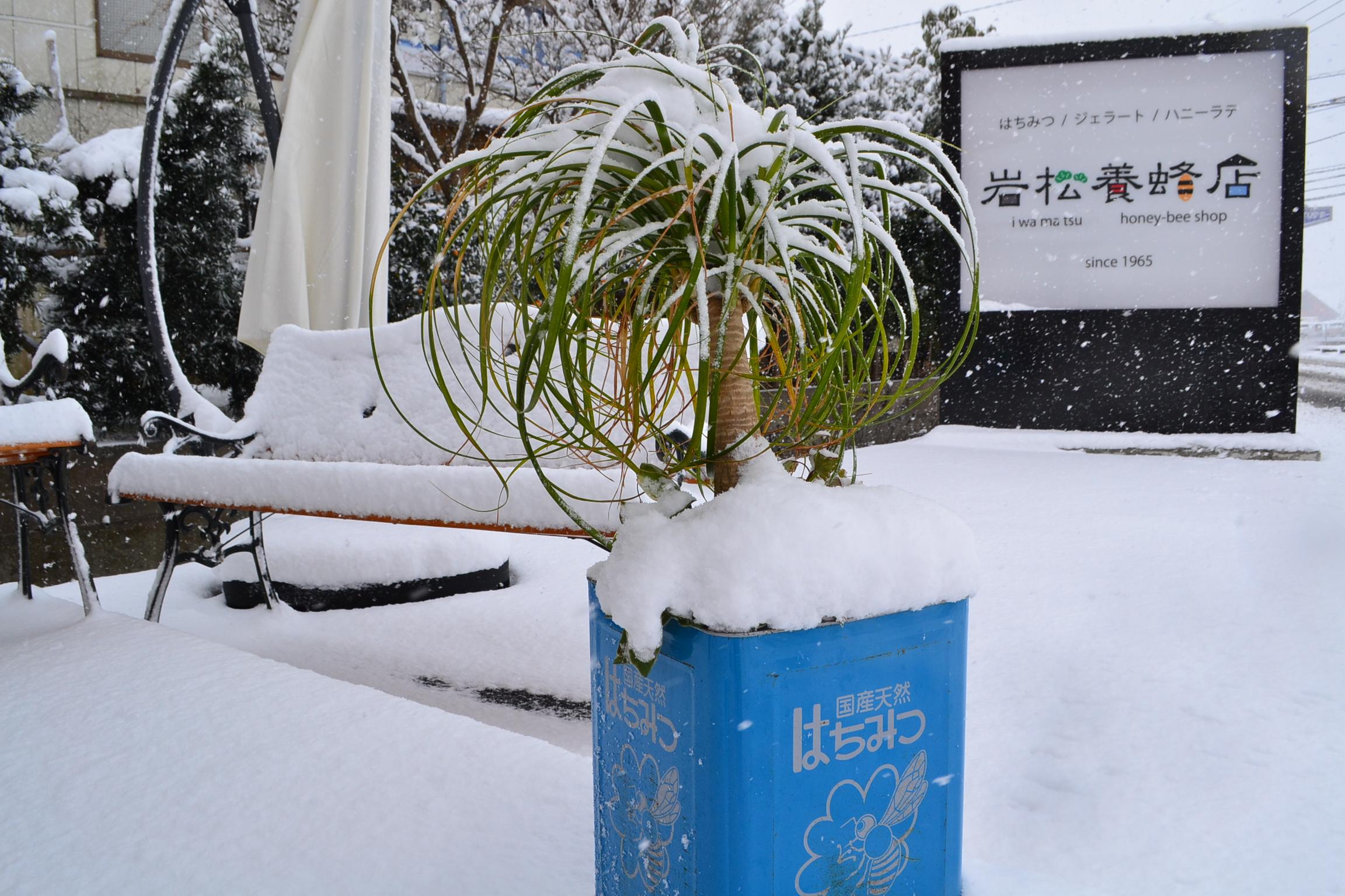 大雪九州襲撃