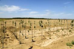 アソビスタ☆の名前で砂漠に1本苗木を植えます